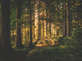 forêt atout pour la France