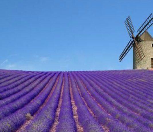 senteur de lavande en France