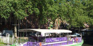 la violette de Toulouse