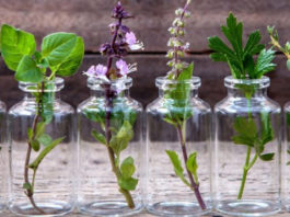 aromatherapie en dosettes